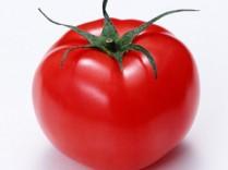 皆、トマト好き?